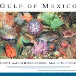 gulf-of-mexico