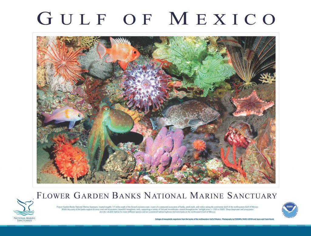 Texas Flower Gardens & Stetson Bank